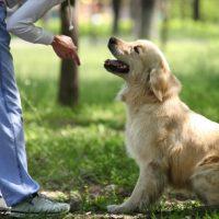 Jonge honden gehoorzaamheid