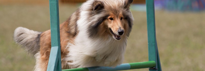 Behendigheid