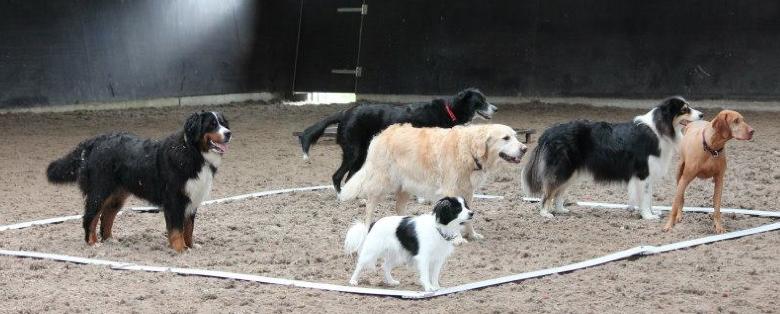 Onze hondenschool biedt professionele begeleiding op maat bij het opvoeden en trainen van jouw hond!